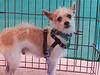 Austin Terrier<br /> J. Stewart<br /> 7/23/11
