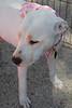 Pearl-2/12/11-Leslie Sans