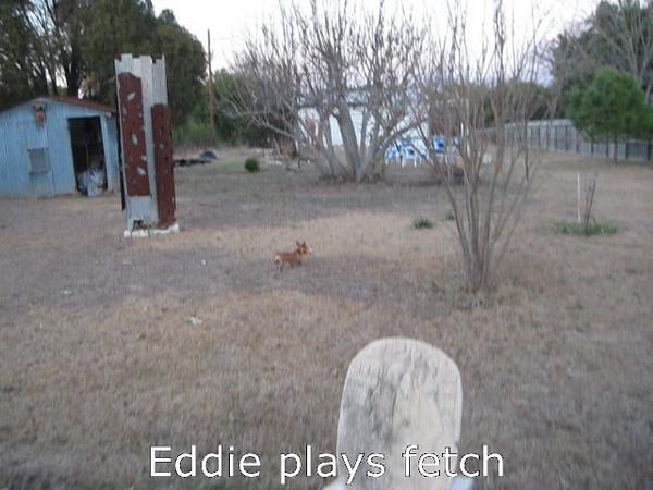 Eddie plays fetch (video) - 02/15/2011 - Claudia A