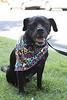 Baxter<br /> Jordan Z<br /> 08.23.11