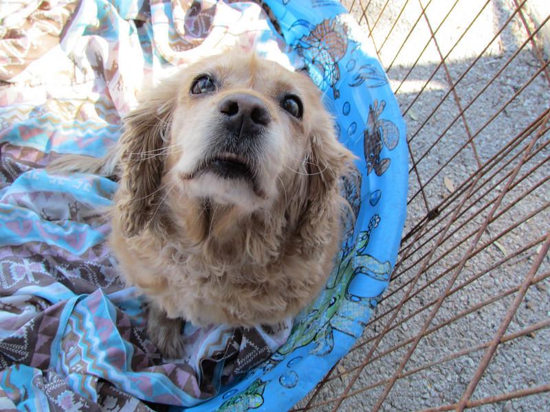 Cookie Spaniel, Feb. 12, Emily Moore