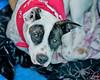 Lori, 2/12/11, Sylvia Cavazos-Malamon, Frolic Foto
