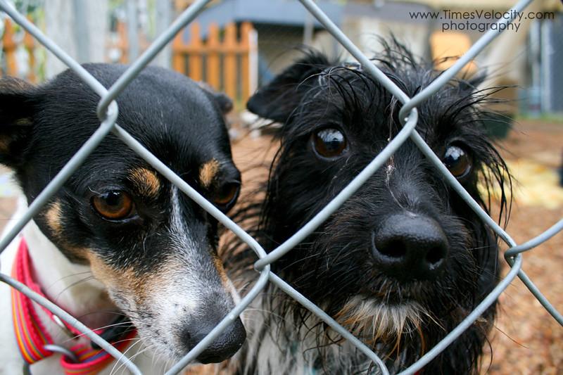 Bruno & Bonnie - 05/19/2011 - Gabby Barrera