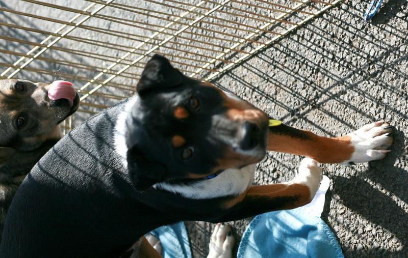 Roscoe Pup - 3/23/11 - Jessica Marsh
