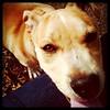 Rocco - 2/22/11 - Mindy Briggs