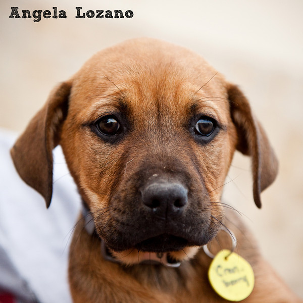 Cranberry - 01/25/11 - Angela Lozano