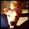 Rocco - 2/22/11  Mindy Briggs