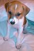 Clover - 03/15/2011 - Gabrielle Smith