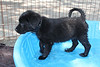Either Bernard or Berrin<br /> Foster left before site manager realized they did not have names<br /> This is the lighter one of the two<br /> Picture taken 06/06/2011 by Jordan Z