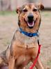Snoopie - 02/26/2011 - Betsy Peticolas