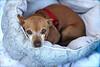 Seymour - 11/1/2011 - Summer Huggins