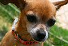 Tangela - 05/29/2011 - Gabby Barrera
