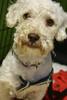 Wubby - 09/01/2011 -  Prim Li