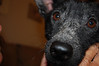 Blackie - 9/11/10 - Beth Kosar