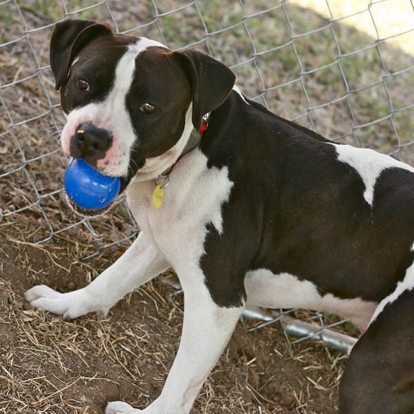 Cooper - 01/08/2011 - Summer Huggins