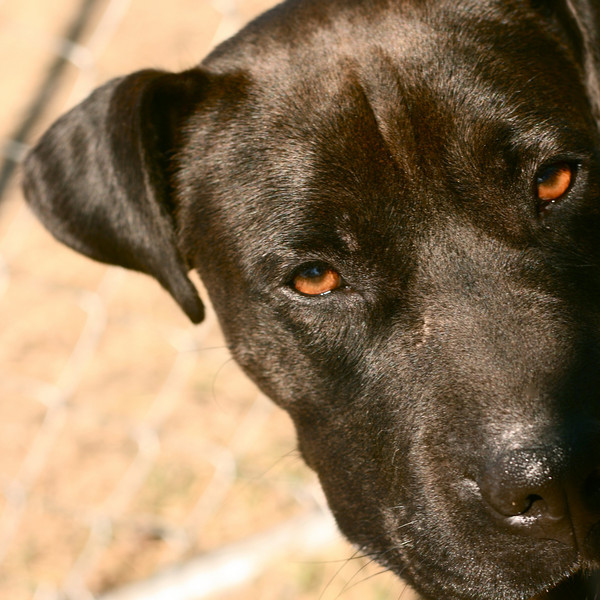 Sonrisa - 01/30/2011 - Summer Huggins
