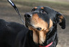 Clyde Rottie-- Jan. 7, 2011 -- Carolyn Yaschur