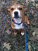 Archie - 2/11/11 - Jessica Cook