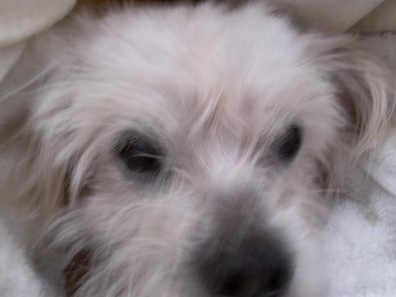 Mildred - 2/11/11 - Jude Ranson