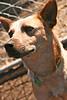 Roxy - 01/22/2011 - Summer Huggins