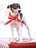 Daisy, 02/12/11, Angela Lozano