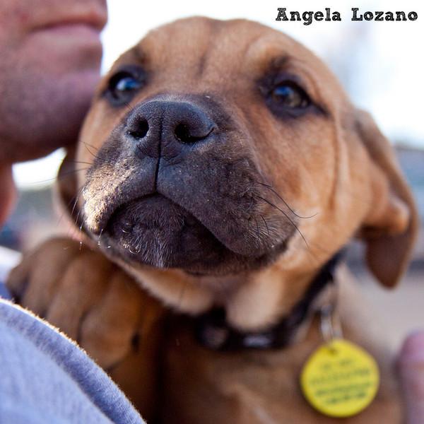 Bilberry - 01/25/11 - Angela Lozano