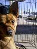 Mr. Fox - 02/15/2011 - Alexis S.