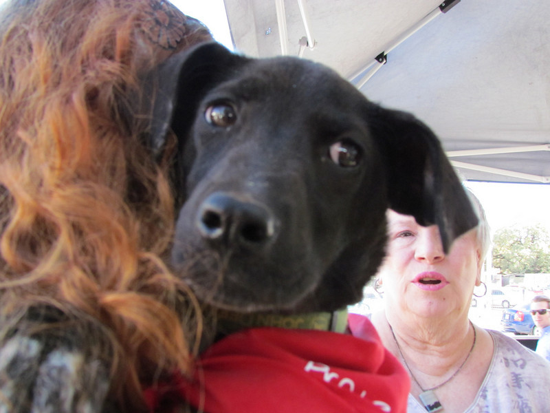 Mollie Terrier, Feb. 12, Emily Moore