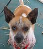Harold - 02/26/2011 - Chiquita Babb