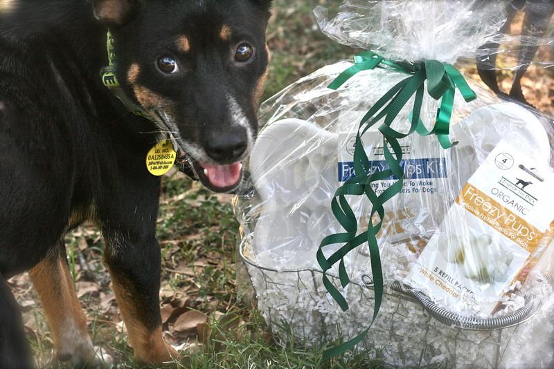 Pet Expo - 06/12/2011 - Summer Huggins (Sundown)
