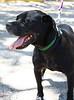 Baxter - 08-18-2011 - Prim Li