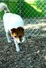 Callie-8.19.2011-Kathleen Hubbard