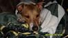 Vince  Lombardi - 1/20/11 - Renee Hawkins