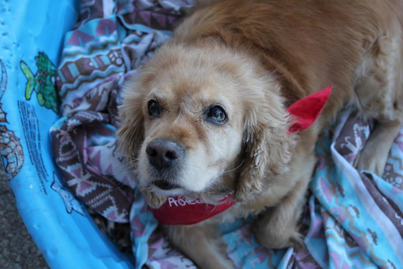 Cookie-2/12/11-Leslie Sans