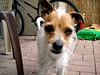 Chiquita - 03/25/2011 - Jaye Hext