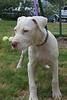 George - 7/19/2011 - Sara Tasch