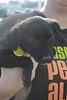 Petunia - 3/12/11 - shorey russell
