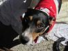 Daisy, Feb. 12, Emily Moore