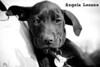 Boisenberry - 01/25/11 -  Angela Lozano