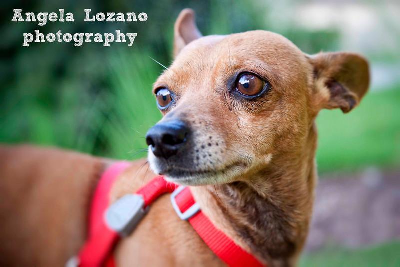 Donny, 4/22/11, Angela Lozano