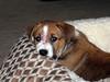 Pippi - 03/18/2011 - John Seay