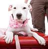 Pearl, 02/12/11, Angela Lozano