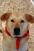 Buddy Lab - 1/28/11 - Jessica Marsh