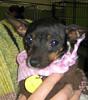 Chiquita - 1/15/11 - Chiquita Babb