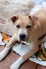 Rocco - 02/26/2011 - Betsy Peticolas
