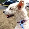 Henrietta 10/8/2011 Sarah Lyons