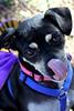 Dudley - 10/16/2011 - Summer Huggins