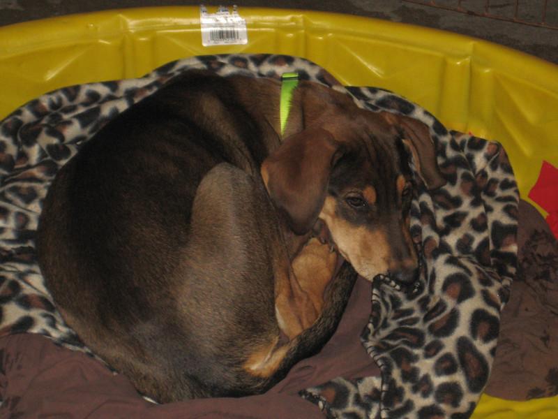 Lila - 12-11-11 -  Victoria Brooks