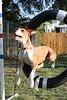 Hester: Agility -- 06/28/2011 -- Summer Huggins