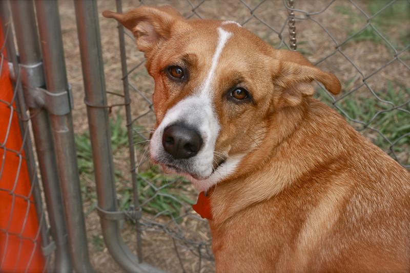 Scout - 03/17/2011 - Summer Huggins